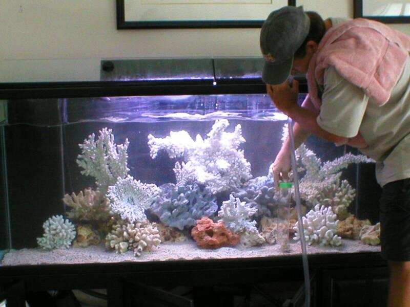 kak-pravilno-chistit-akvarium-s-rybkami-v-domashnih-usloviyah