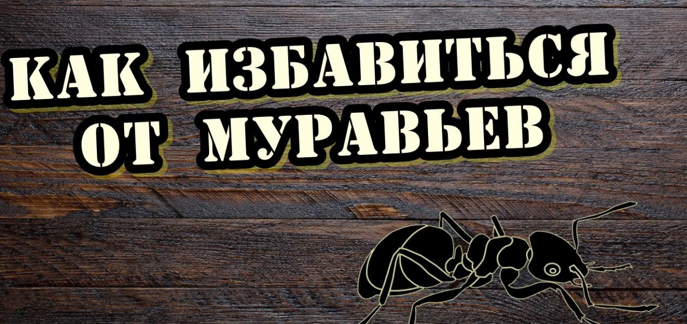kak-vyvesti-muravyev