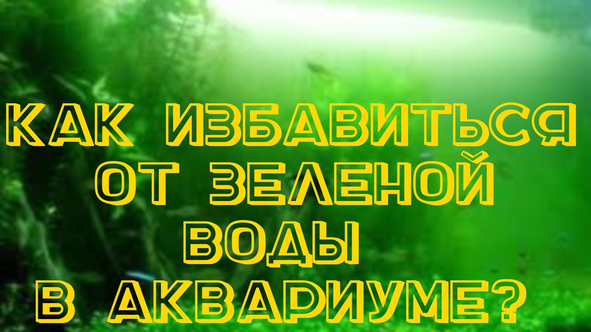 zelenaya-voda